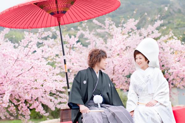 桜ロケの写真